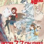 2018年7月放送テレビアニメ「はたらく細胞」第2弾キービジュアル・PVを公開!追加キャスト/最新放送・配信情報を解禁!